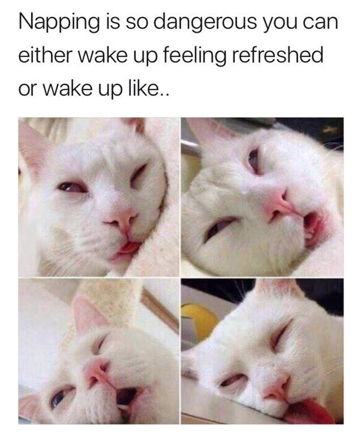 Cat - Napping is so dangerous you can either wake up feeling refreshed or wake up like..