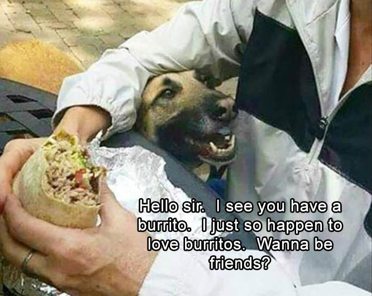 Burrito - Hello sir I see you have a burrito. Djust so happen to love burritos. Wanna be friends?
