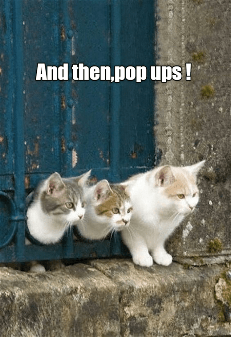 Cat - And then,pop ups!