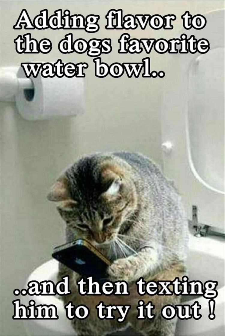Cat - Adding flavor to the dogs favorite water bowl. Oand then texting him to try it out!