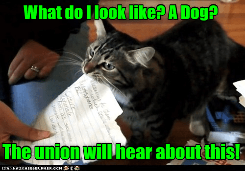 Cat - What do I look Iike? A Dog? The union will hear about this! ICANHASCHEE2EURGER cOM hich aerts Thnale as sec rotelle Lelidar