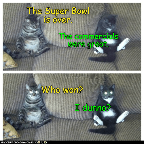 Cat - The Super Bowl is over. The commercials were great. Who won? I dunno? CANHASCHEE2EURGER cOM