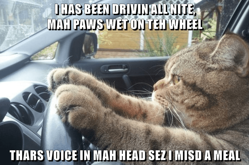 Photo caption - IHAS BEEN DRIVINALL NITE MAH PAWS WETON TEH WHEEL THARS VOICE IN MAH HEAD SEZIMISD A MEAL