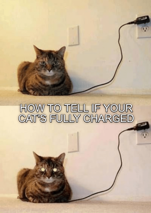 Cat - HOW TO TELL IF YOUR CAT'S FULLY CHARGED