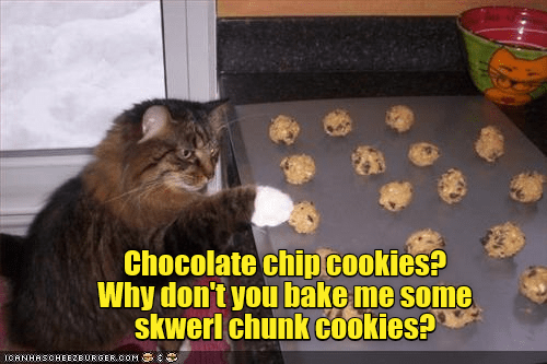 Cat - Chocolate chip cookies? Why don't you bake me some skwerl chunk cookies? ICANHASCHEE2EURGER.COM