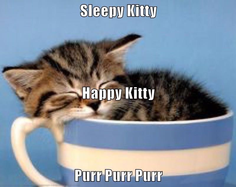 Cat - Sleepy Kitty Нарру Kitty Purr Purr PurT