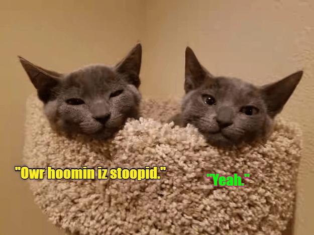 "Cat - ""OWr hoomin iz Stoopid Yeahs"
