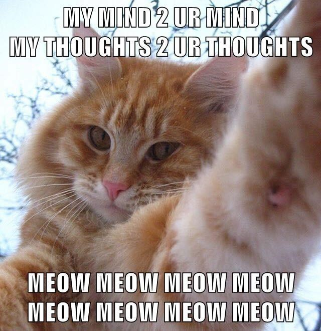 Photo caption - MY MIND 2 UR MIND MY THOUGHTS 2UR THOUGHTS MEOW MEOW MEOW MEOW MEOW MEOW MEOW MEOW