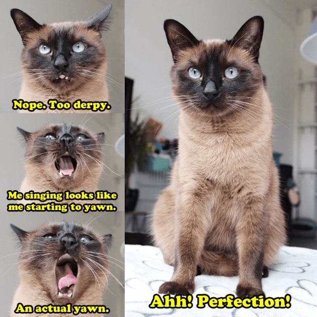 Cat - Nope, Too derpy Mesinging looks ike me starting to yawn Ahh! Perfection! Anactual yawn.