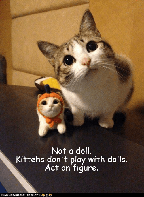 Cat - Not a doll Kittehs don't play with dolls. Action figure. OANHASOHEE2E URGER.0OM