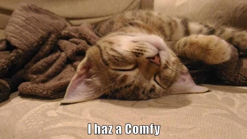 Cat - I haz a Comfy