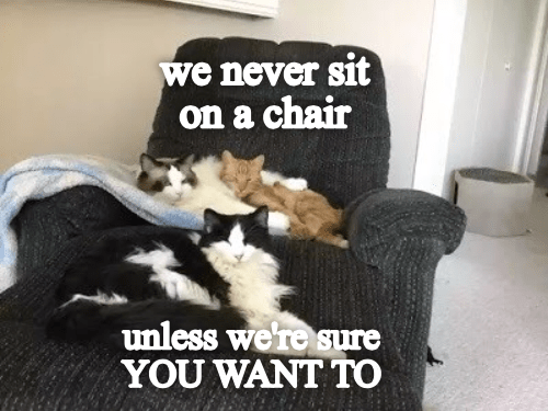 Photo caption - we never sit on a chair unless were sure YOU WANT TO