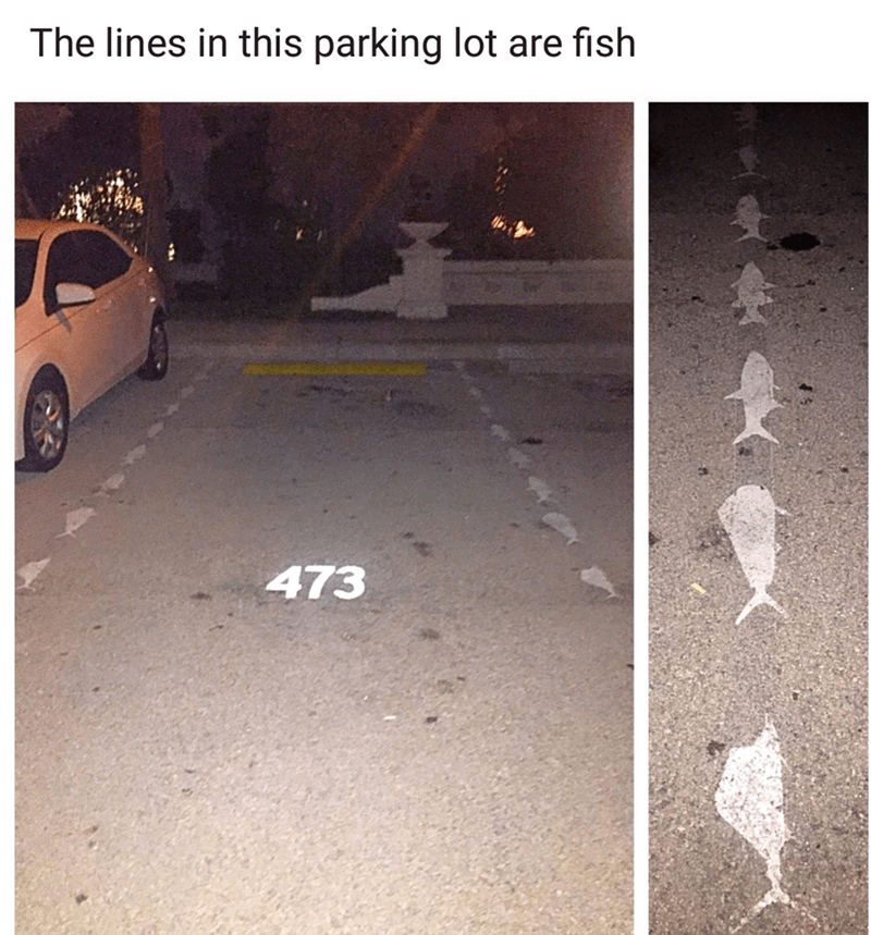 Text - The lines in this parking lot are fish 473