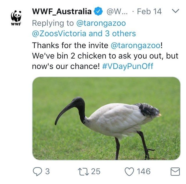 Australia new Zealand valentines - Ibis - @W... Feb 14 wWF_Australia Replying to @tarongazoo @ZoosVictoria and 3 others wWF Thanks for the invite @tarongazoo! We've bin 2 chicken to ask you out, but now's our chance! #VDayPunOff 3 t25 146