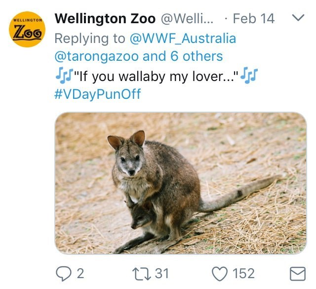 "Australia new Zealand valentines - Wallaby - Wellington Zoo @Welli... Feb 14 Lo Replying to @WWF_Australia WELLINGTON @tarongazoo and 6 others JsIf you wallaby my lover..."" #VDayPunOff 2 t31 152"