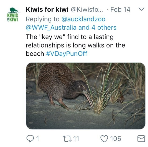 "Australia new Zealand valentines - Adaptation - Kiwis for kiwi @Kiwisfo... Feb 14 KIWIS KIMEReplying to @aucklandzoo @WWF_Australia and 4 others The ""key we"" find to a lasting relationships is long walks beach #VDayPunOff 1 105 211"