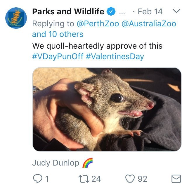 Australia new Zealand valentines - Wildlife - Parks and Wildlife Feb 14 Replying to @Perth Zoo @AustraliaZoo and 10 others We quoll-heartedly approve of this #VDayPunOff #ValentinesDay Judy Dunlop 1 92 t24