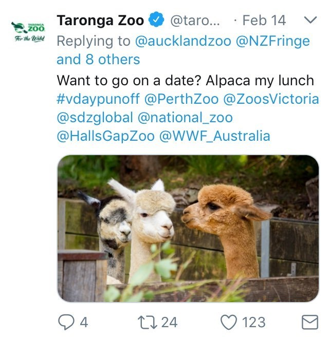 Australia new Zealand valentines - Alpaca - Taronga Zoo iReplying to @aucklandzoo @NZFringe Feb 14 @taro... ZOO ARDNGA and 8 others Want to go on a date? Alpaca my lunch #vdaypu no ff@ PerthZoo @ZoosVictoria @sdzglobal @national_zoo @HallsGapZoo @WWF_Australia 4 24 123