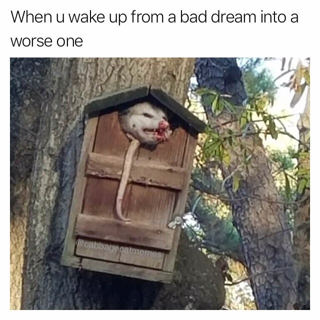Funny meme about possum and nightmares.