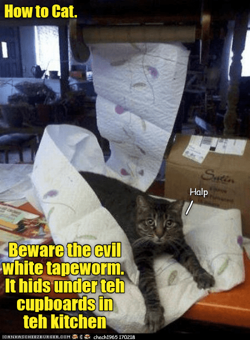 How to Cat.