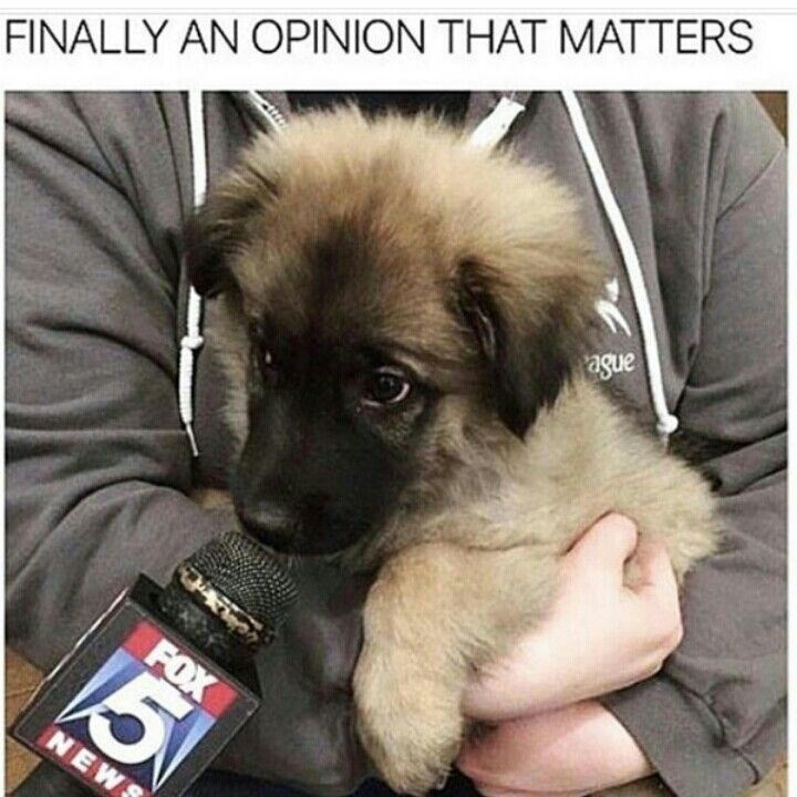 Dog - FINALLY AN OPINION THAT MATTERS FOX 5 NEW