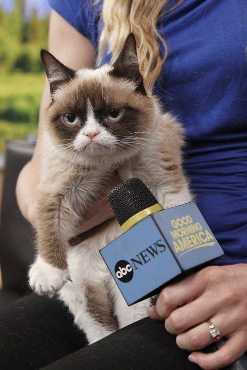 Cat - GOOD abc NEWS HORNING AMERICA