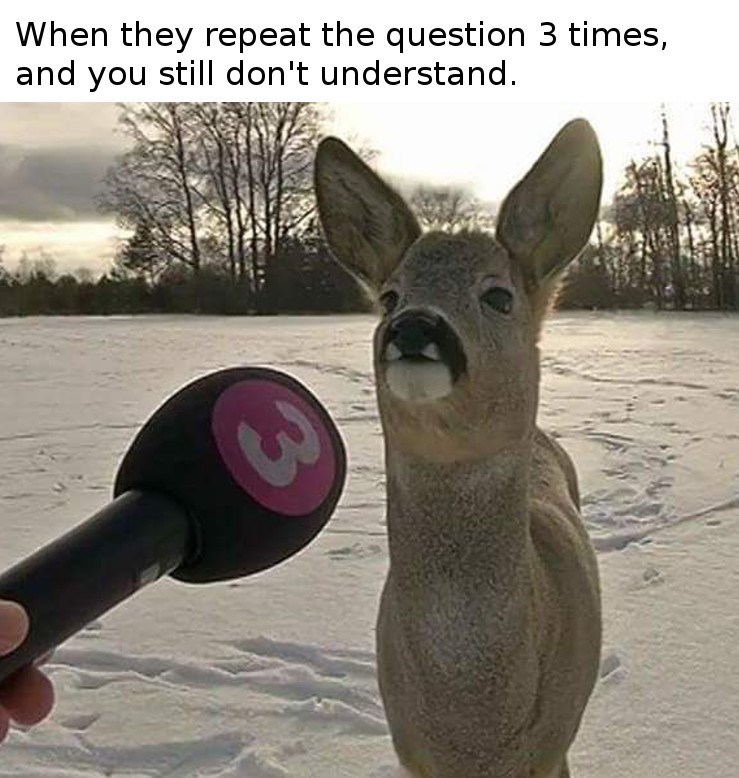 Deer - When they repeat the question 3 times, and you still don't understand. 3