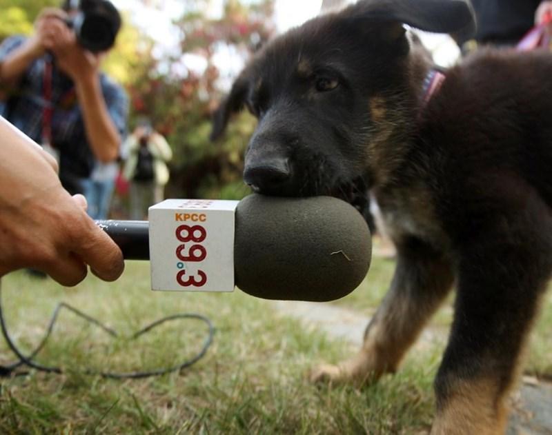 Dog - 89.3