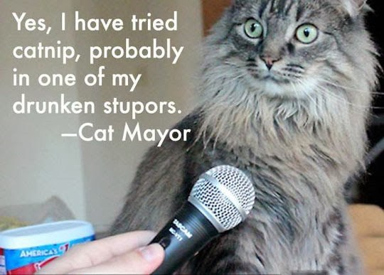 Cat - Yes, I have tried catnip, probably in one of my drunken stupors. -Cat Mayor DASCAM MT AHERICAS