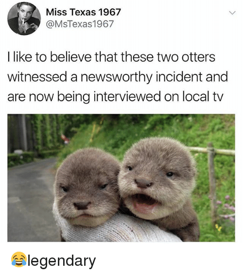 Adaptation - Miss Texas 1967 @MsTexas1967 I like to believe that these two otters witnessed a newsworthy incident and are now being interviewed on local tv legendary