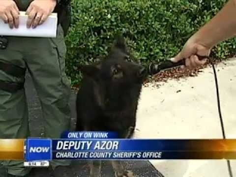 Brown bear - ONLY ON WINK DEPUTY AZOR NOW CHARLOTTE COUNTY SHERIFF'S OFFICE