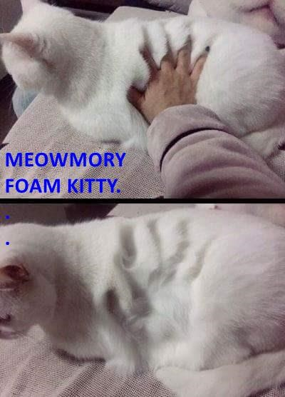 MEOWMORY FOAM KITTY. . .