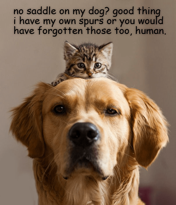 cats and dogs dog memes cat memes - 9129053184