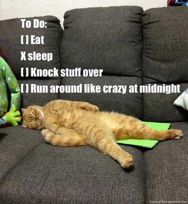 Cat - To Do: II Eat K sleep II Knock stuff over II Run around like crazy at midnight Found at fundatpictures .com