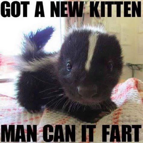meme - Striped Skunk - GOT A NEW KITTEN MAN CAN IT FART