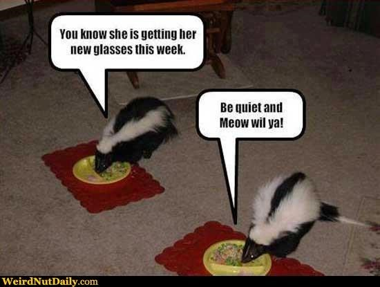 meme - Striped Skunk - You know she is getting her new glasses this week. Be quiet and Meow wil ya! WeirdNutDaily.com