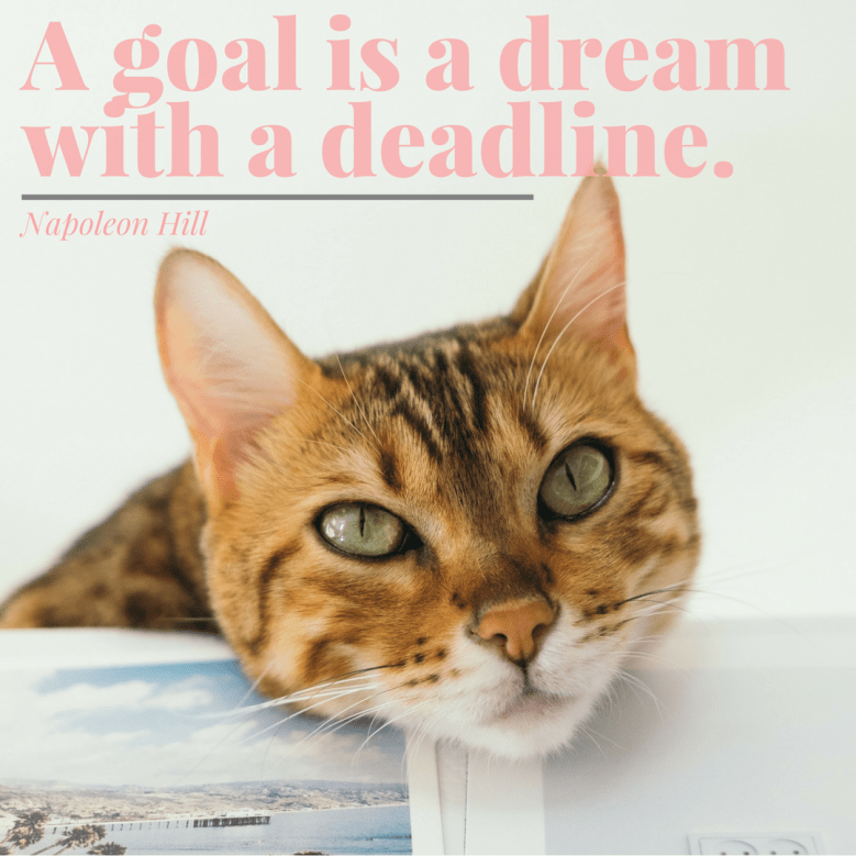 Cat - A goal is a dream with a deadline. Napoleon Hill