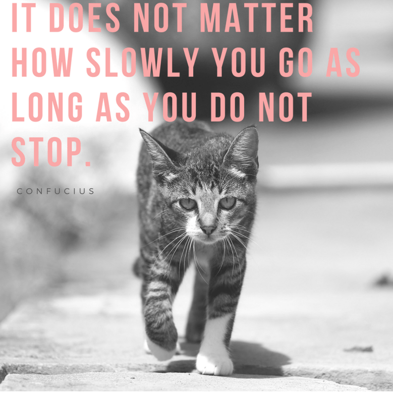 Cat - IT DOES NOT MATTER HOW SLOWLY YOU GO AS LONG AS YOU DO NOT STOP CONFUCIUS