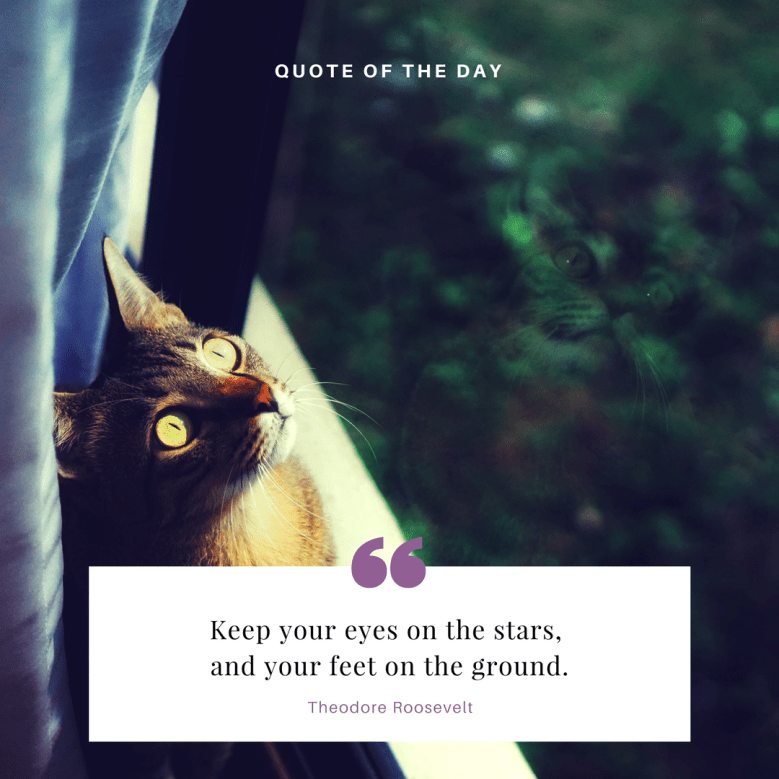 Cat - QUOTE OF THE DAY Keep your eyes on the stars, and your feet on the ground Theodore Roosevelt