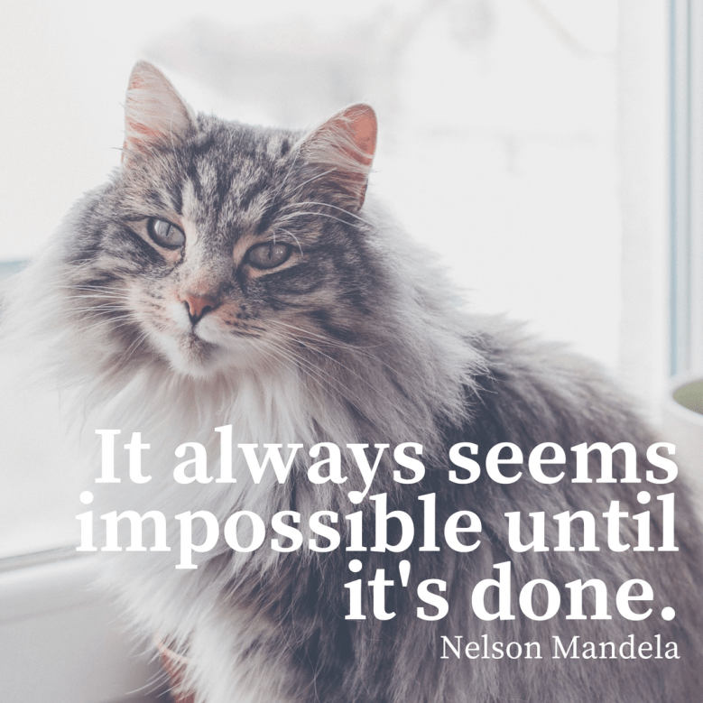 Cat - It always seems impossible until it's done. Nelson Mandela