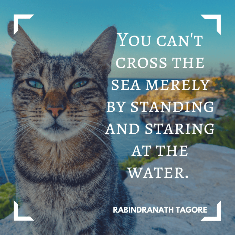 Cat - YOU CAN'T CROSS THE SEA MERELY BY STANDING AND STARING AΤ THΕ. WATER. RABINDRANATH TAGORE