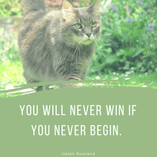 Cat - YOU WILL NEVER WIN IF YOU NEVER BEGIN. Helen Rowland