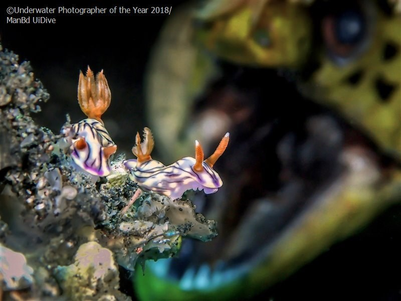 Organism - OUnderwater Photographer of the Year 2018/ ManBd UiDive