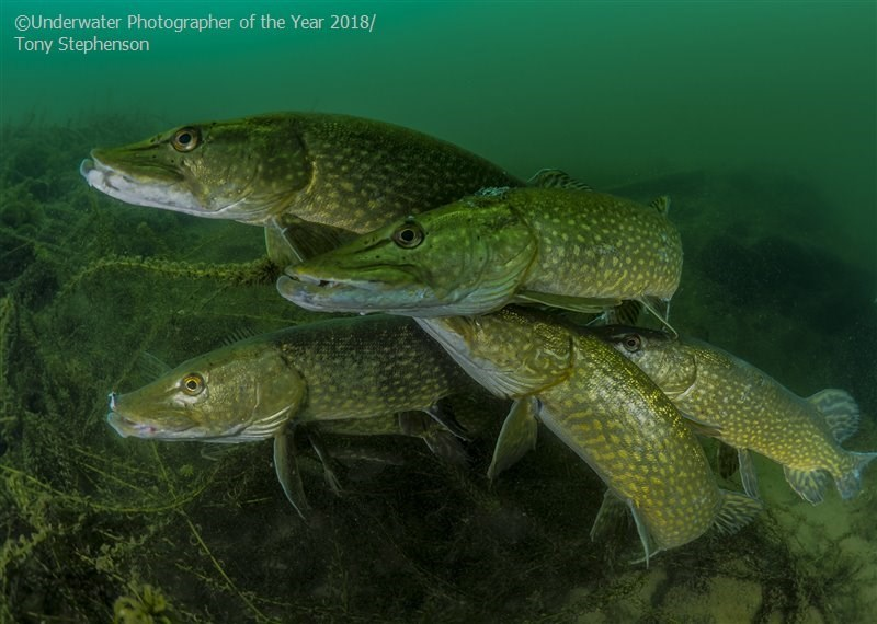 Fish - OUnderwater Photographer of the Year 2018/ Tony Stephenson