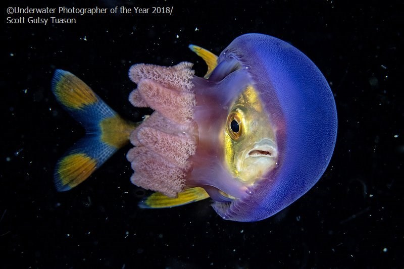 Fish - OUnderwater Photographer of the Year 2018/ Scott Gutsy Tuason