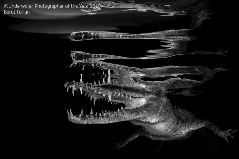 Black - OUnderwater Photographer of the Year 2018 Borut Furlan