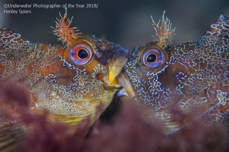 Marine biology - OUnderwater Photographer of, the Year 2018/ Henley Spiers 22