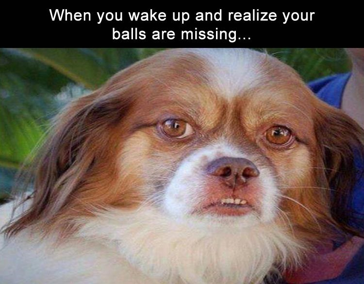dog meme of a dog looking upset that his balls are missing