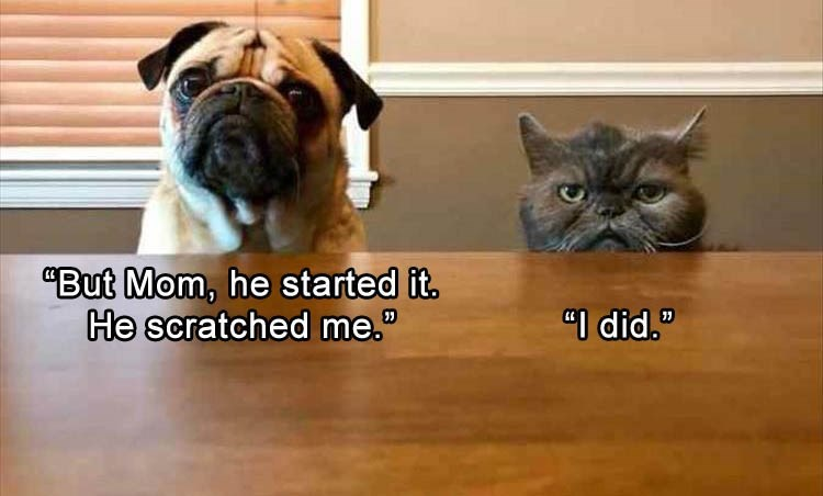 pug and cat looking over a table together