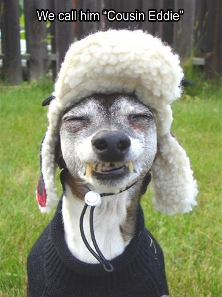 dog meme of a dog wearing a hat and squinting